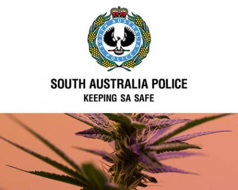 South Australian police execute multiple cannabis raids