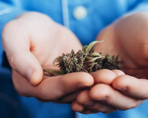 Welcoming hands offering cannabis