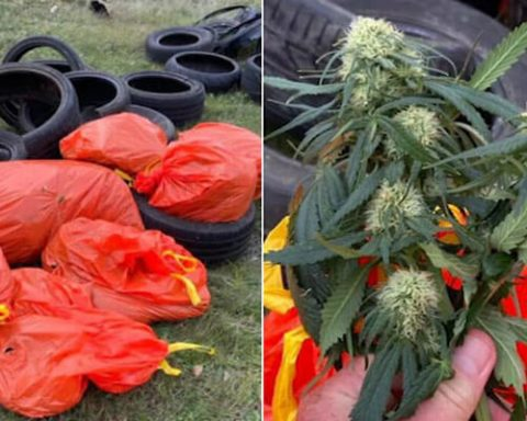 Cannabis found in trash bags in South Australia