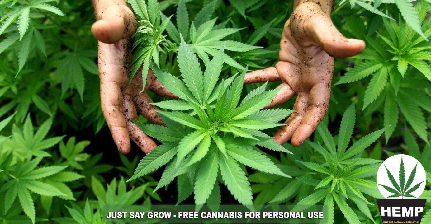 Grow cannabis for the HEMP Party