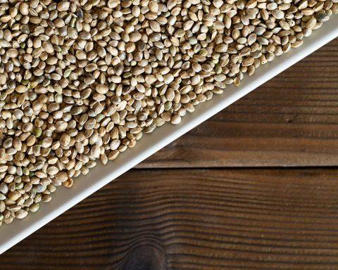 Hemp seeds 1