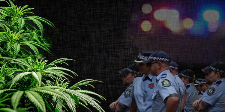 NSW police officers watching over a cannabis plants