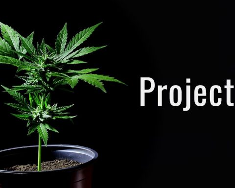 Project21 cannabis logo
