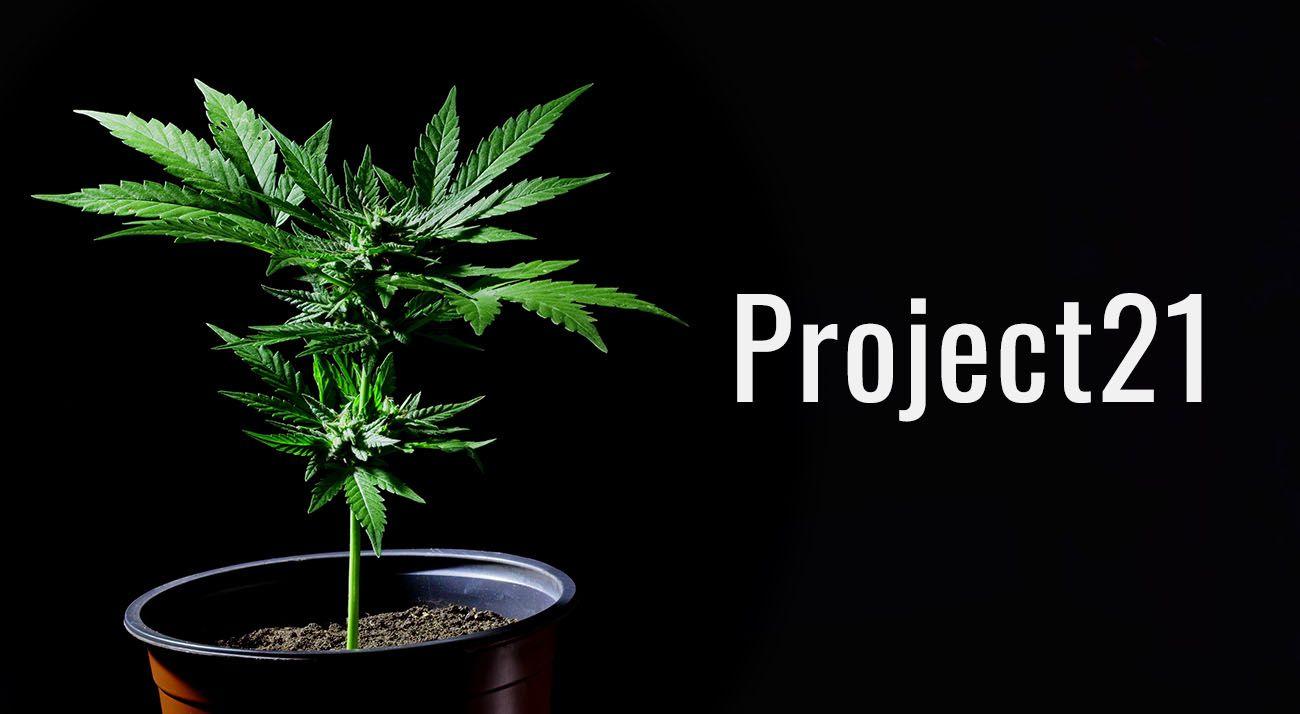 Project21 cannabis logo