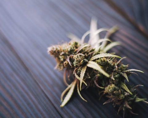 Small cannabis flower on a wooden floor