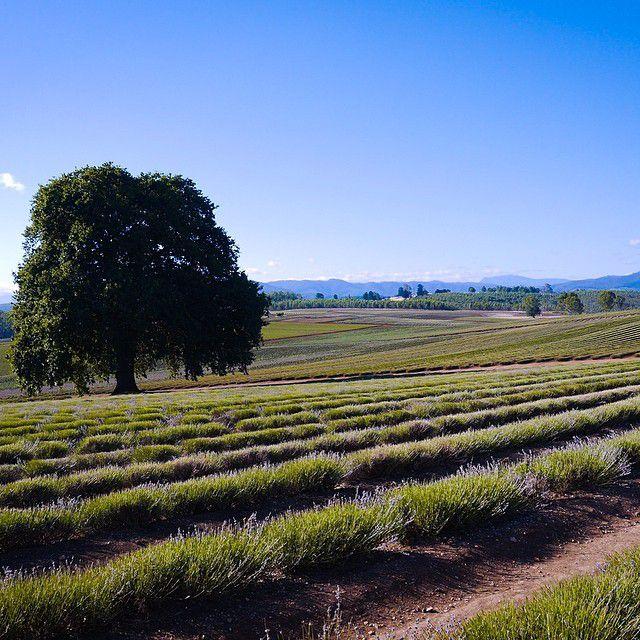 Tasmania farm 1