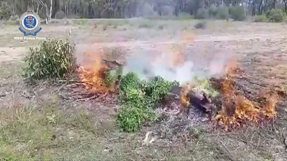 Cannabis being burnt by the NSW Police Force
