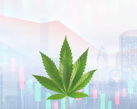 Cannabis and the stock market