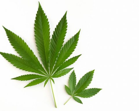 Cannabis can help intenstinal issues
