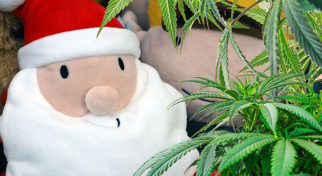 Australian cannabis christmas