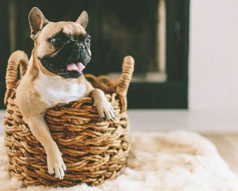 Cute dog smiling in laundry basket