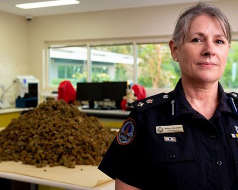 Northern Territory police showcasing a cannabis seizure