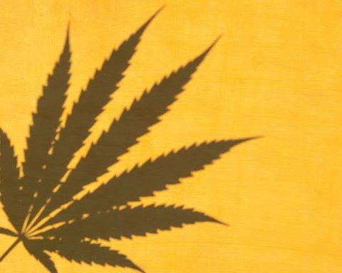 Shadow of a cannabis leaf on an orange background