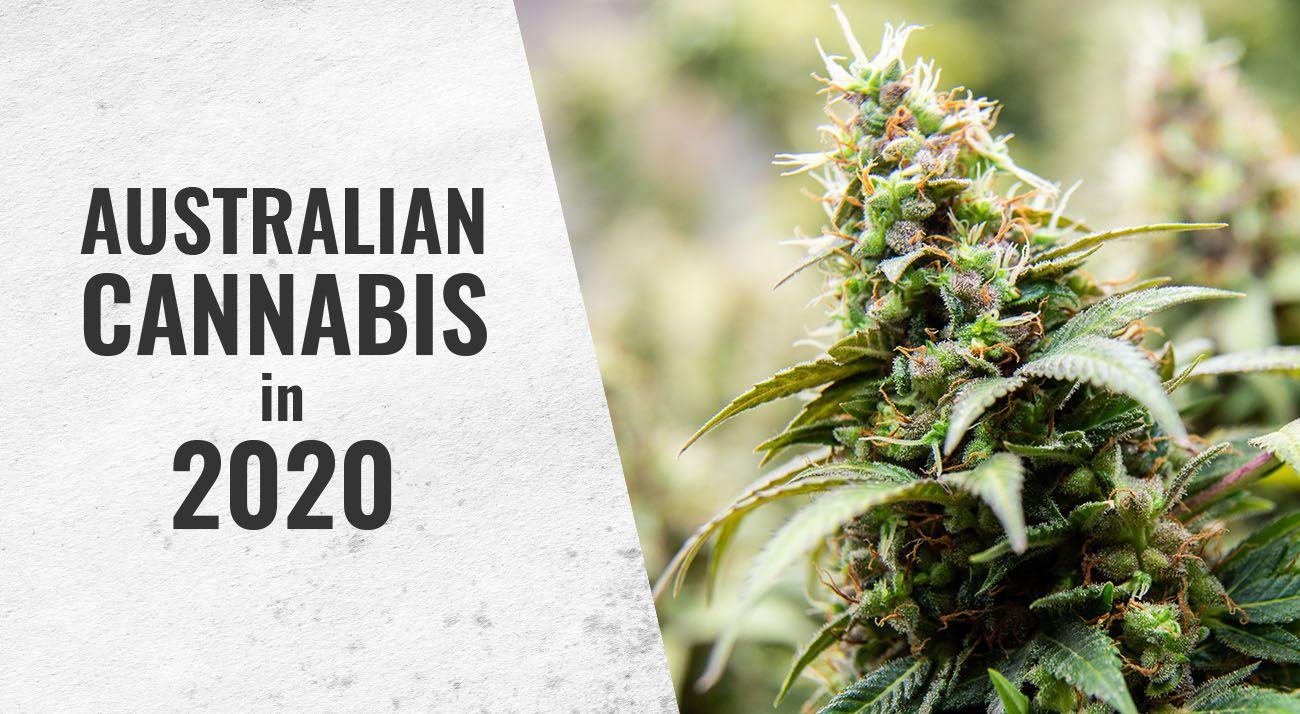 Australian cannabis news in 2020