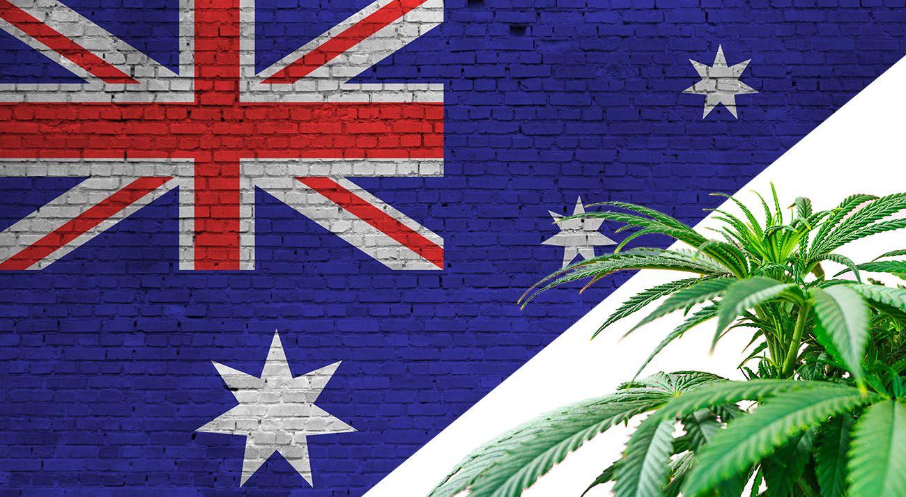 Australian flag with cannabis