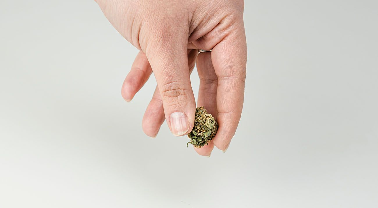 Person holding a cannabis bud