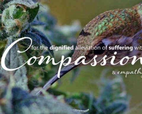 United in Compassion screenshot from website