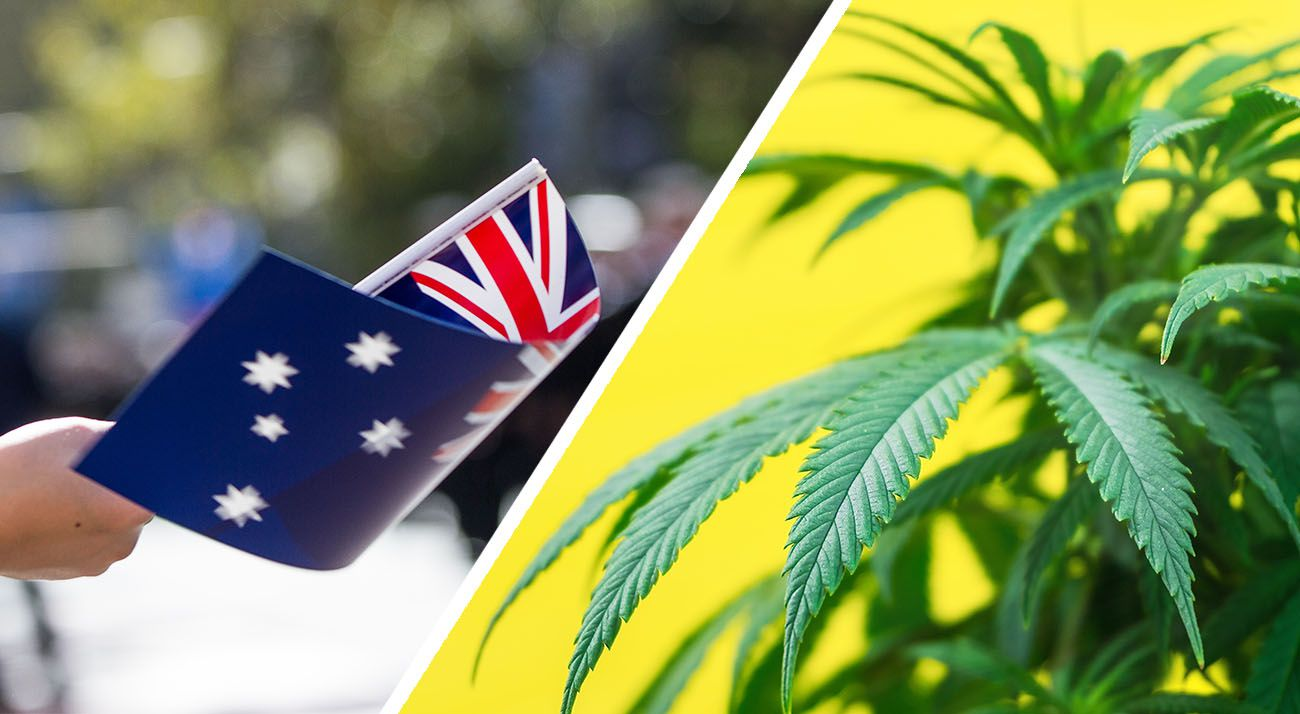 Australian waving flag and cannabis plant