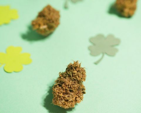 Cannabis and clover on a background