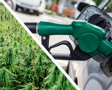 Hemp biofuel in Australia