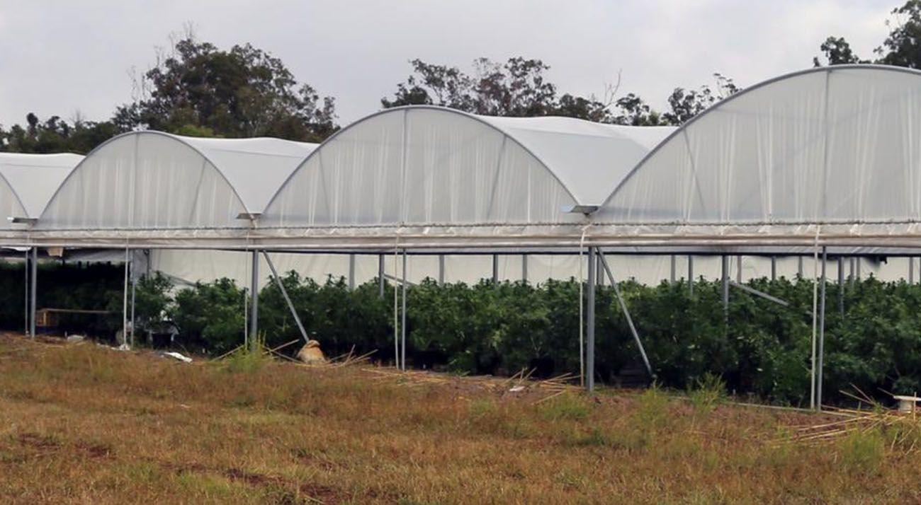 Illicit cannabis farm in Australia