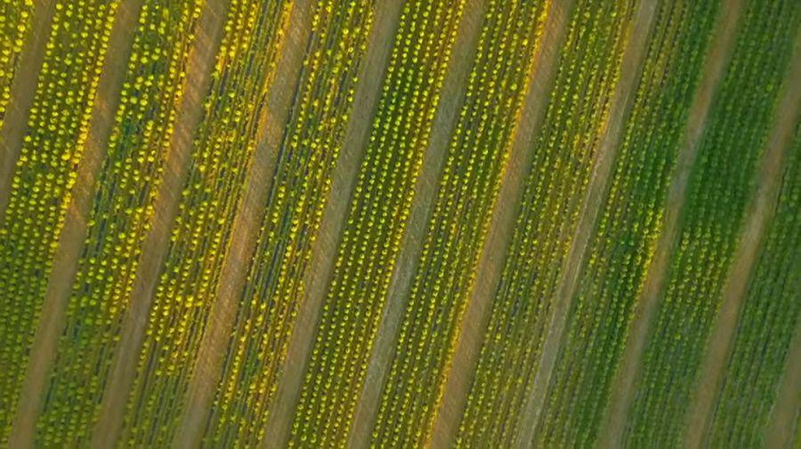 Aerial shot of the farm