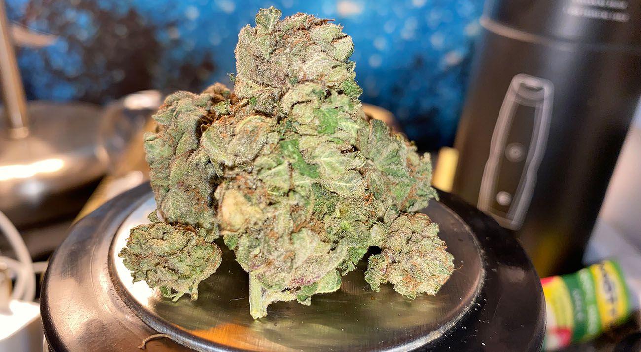 Illegal cannabis buds grown in Australia
