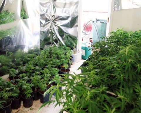 Illegal cannabis grow house in the ACT