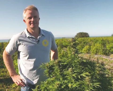 New Zealand medical cannabis company farmer