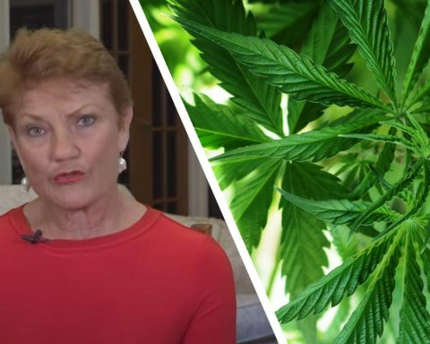Pauline Hanson One Nation on cannabis legalisation in Australia