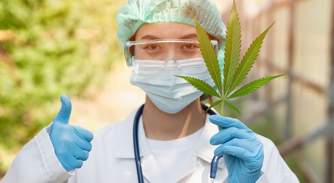 Scientist researching cannabis leaves