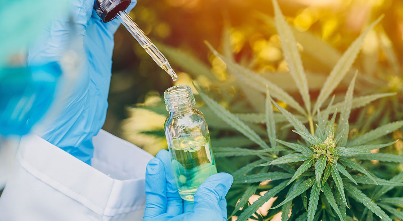 Scientist working with cannabis acids