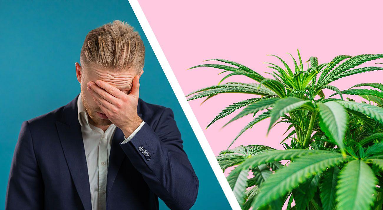 Cannabis facepalm