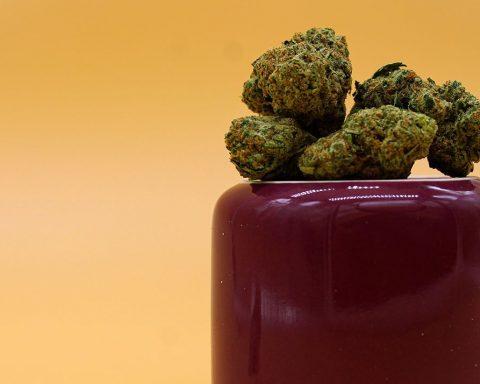 Cannabis flower buds on an upside down coffee jug