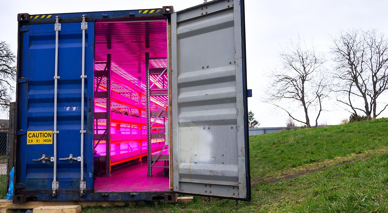 Shipping container set up for growing cannabis