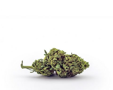 Small cannabis flower bud on a white background