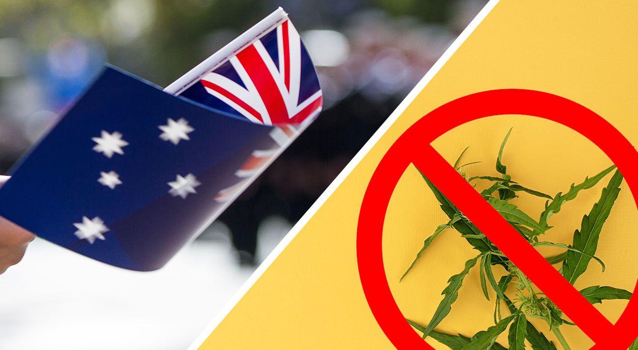 Drug Free Australia says no to cannabis