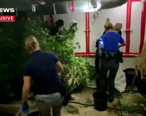 Inside a cannabis grow house in Western Australia