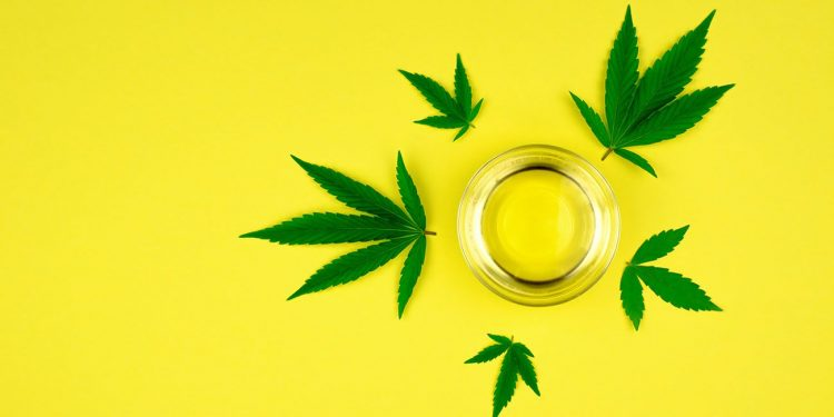 Cannabis leaves on a yellow backround