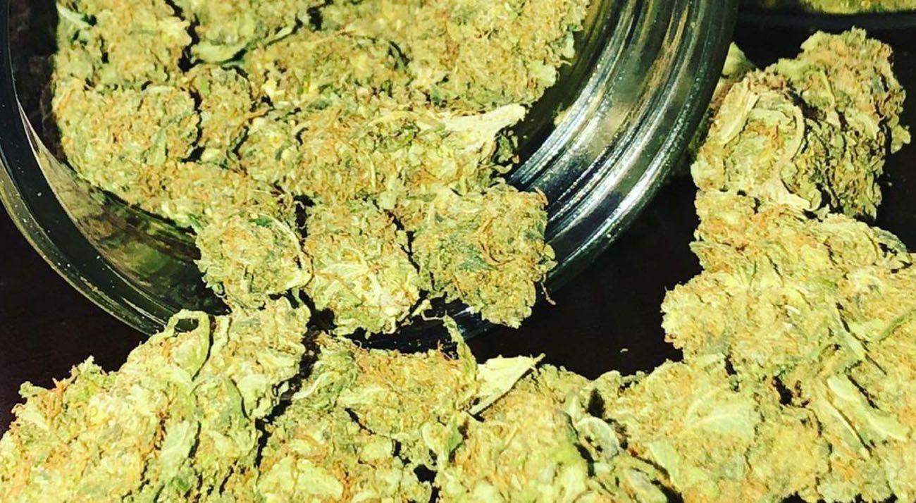 Dried cannabis in a jar