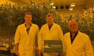 Joshua Dennis David Evans and Richard Duce at the Caniaba cannabis farm indoor grow facilities