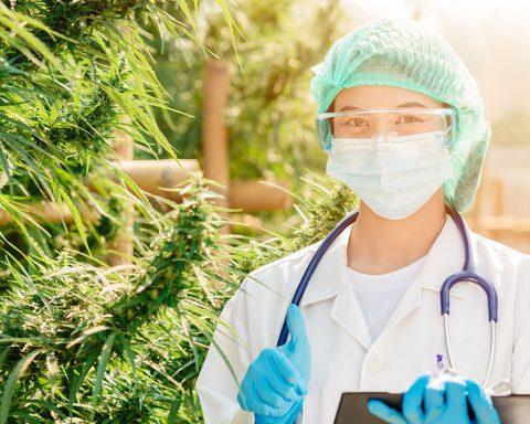 Scientist standing next to cannabis