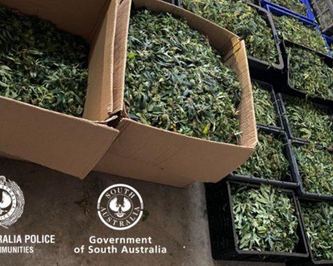 South Australian police cannabis seizure
