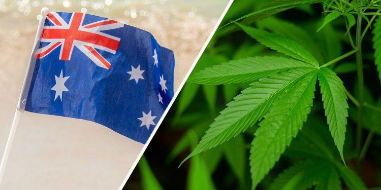 Cannabis plant with Australian flag