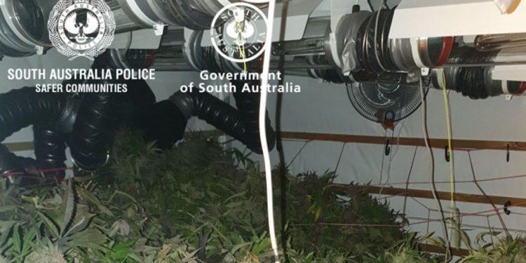 Illegal cannabis grow house in South Australia