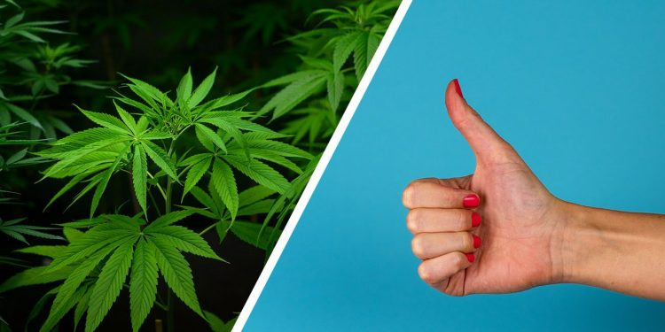 Thumbs up for cannabis