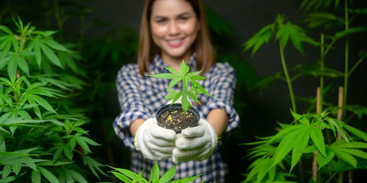 Woman holding a cannabis plant