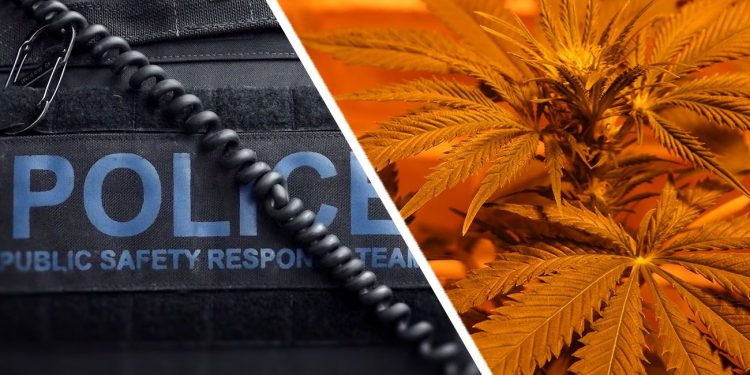 Australian police next to a cannabis plant