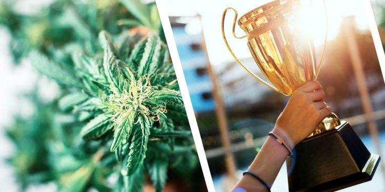 Cannabis trophy