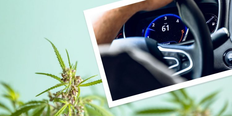 Person driving car with a cannabis background